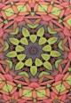 Leunelle Husa multicolora pentru perna decorativa cu imprimeu Mandala Femei